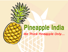 Manipur Pineapple-India